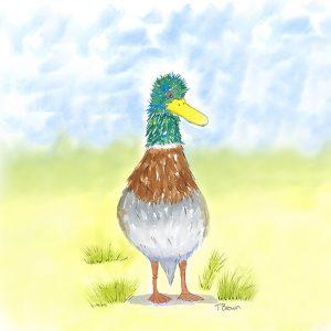 """""""Martin the Mallard duck"""" Square drinks coaster"""