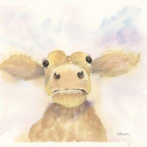 """Gilbert the calf "" Square farmyard drinks coaster"